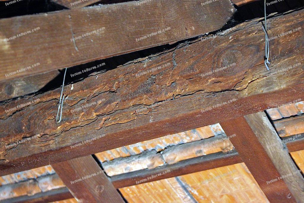 Capricornes charpente toiture
