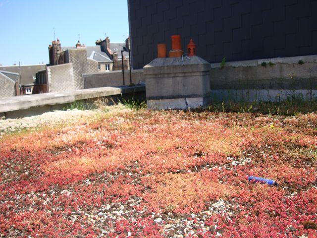 Travaux toiture conseils des internautes etanch it du toit terrasse d 39 un - Cout refaire toiture ...