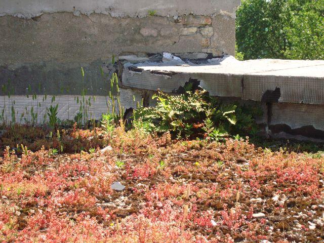 Spécialiste étanchéité toit terrasse